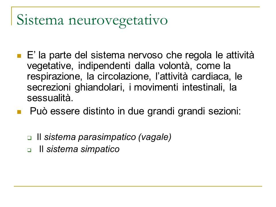 Sistema neurovegetativo E la parte del sistema nervoso che regola le attività vegetative, indipendenti dalla volontà, come la respirazione, la circola