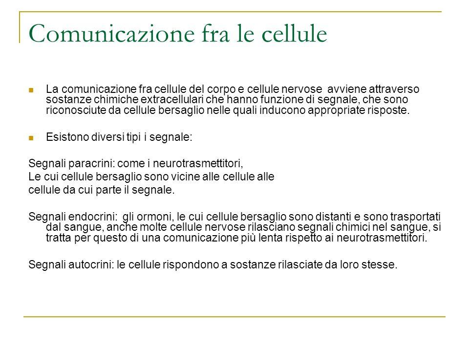 Comunicazione fra le cellule La comunicazione fra cellule del corpo e cellule nervose avviene attraverso sostanze chimiche extracellulari che hanno fu