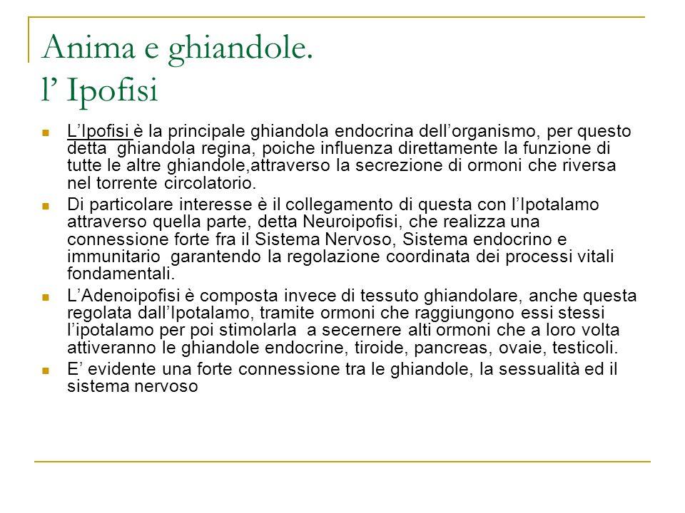 Anima e ghiandole. l Ipofisi LIpofisi è la principale ghiandola endocrina dellorganismo, per questo detta ghiandola regina, poiche influenza direttame