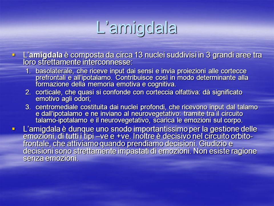 Lamigdala Lamigdala è composta da circa 13 nuclei suddivisi in 3 grandi aree tra loro strettamente interconnesse: Lamigdala è composta da circa 13 nuc