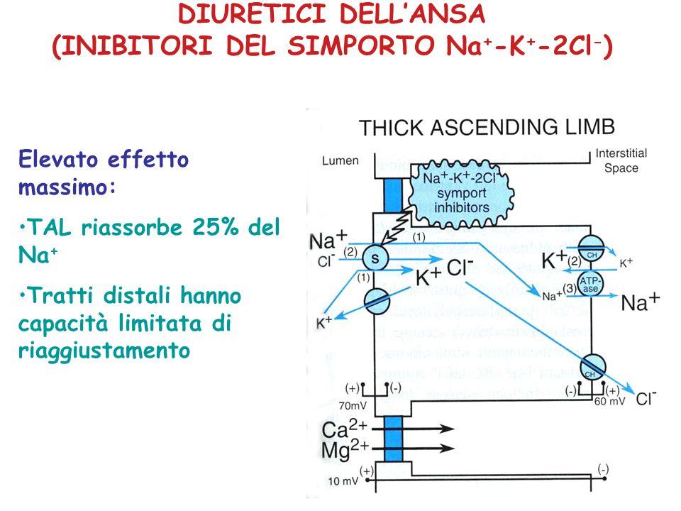 DIURETICI DELLANSA (INIBITORI DEL SIMPORTO Na + -K + -2Cl - ) Elevato effetto massimo: TAL riassorbe 25% del Na + Tratti distali hanno capacità limita