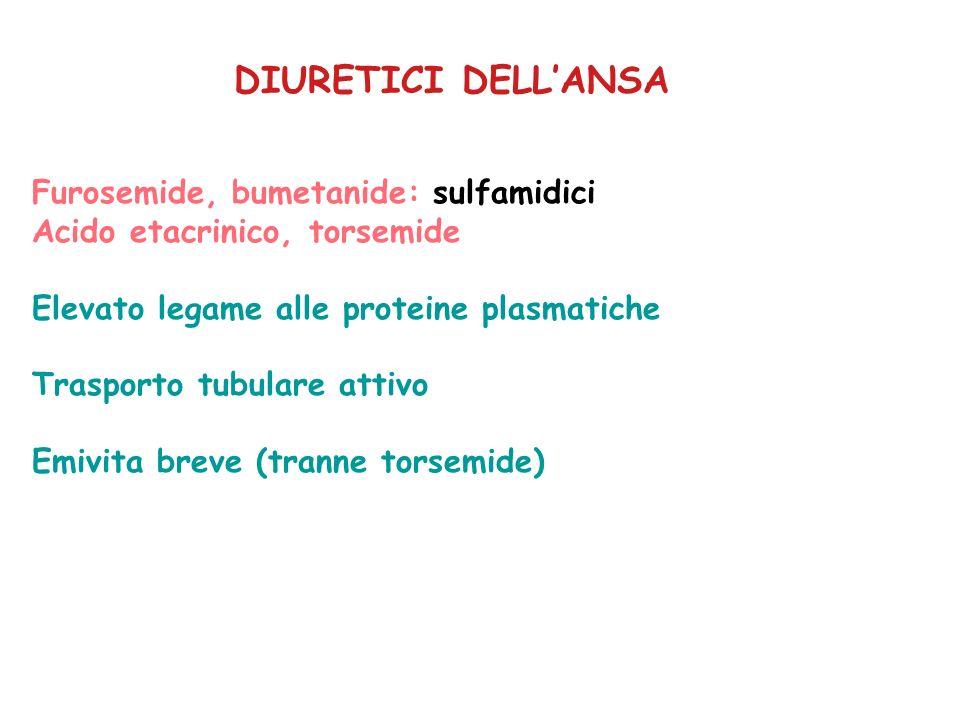 DIURETICI DELLANSA Furosemide, bumetanide: sulfamidici Acido etacrinico, torsemide Elevato legame alle proteine plasmatiche Trasporto tubulare attivo