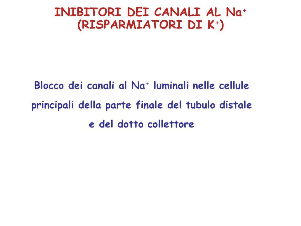 Blocco dei canali al Na + luminali nelle cellule principali della parte finale del tubulo distale e del dotto collettore