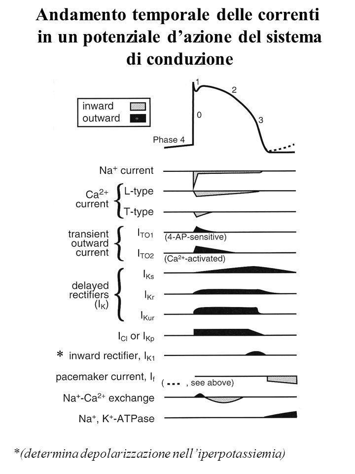 Andamento temporale delle correnti in un potenziale dazione del sistema di conduzione *(determina depolarizzazione nelliperpotassiemia) *