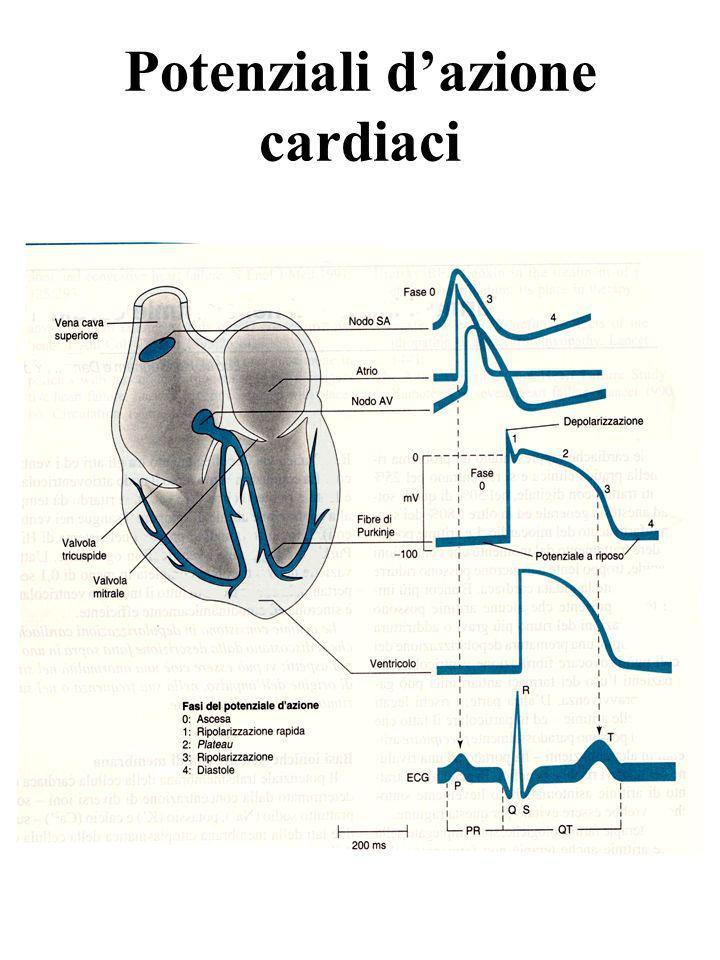 Potenziali dazione cardiaci