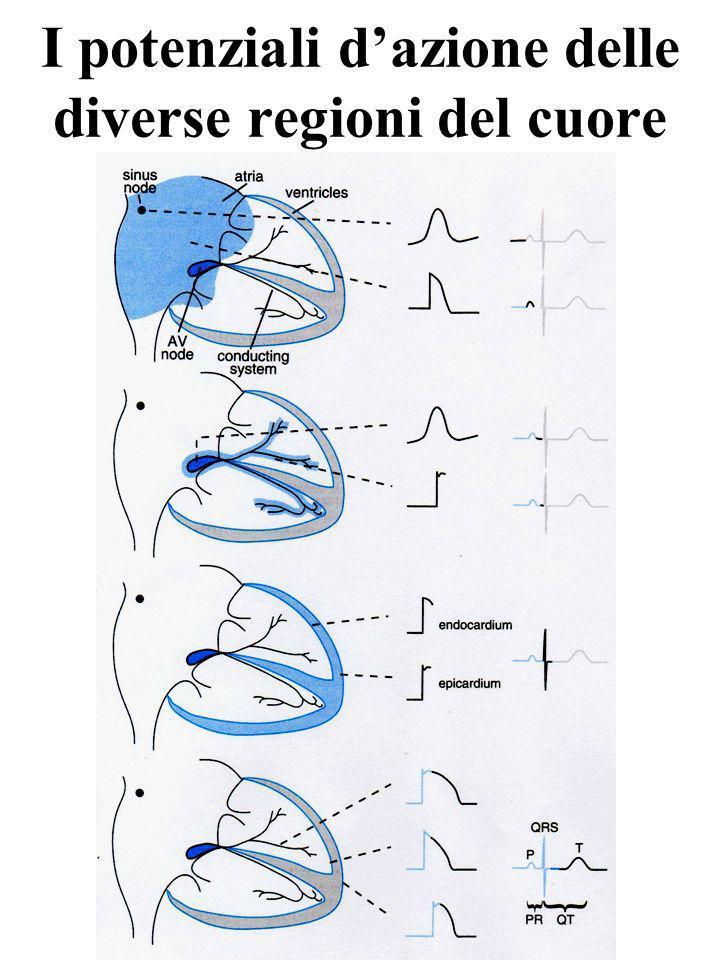 I potenziali dazione delle diverse regioni del cuore