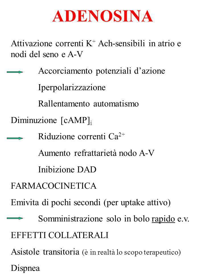 ADENOSINA Attivazione correnti K + Ach-sensibili in atrio e nodi del seno e A-V Accorciamento potenziali dazione Iperpolarizzazione Rallentamento auto