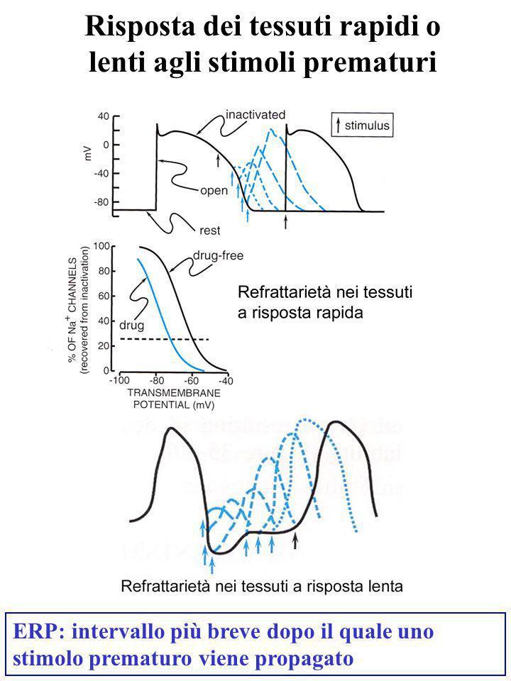 Risposta dei tessuti rapidi o lenti agli stimoli prematuri ERP: intervallo più breve dopo il quale uno stimolo prematuro viene propagato