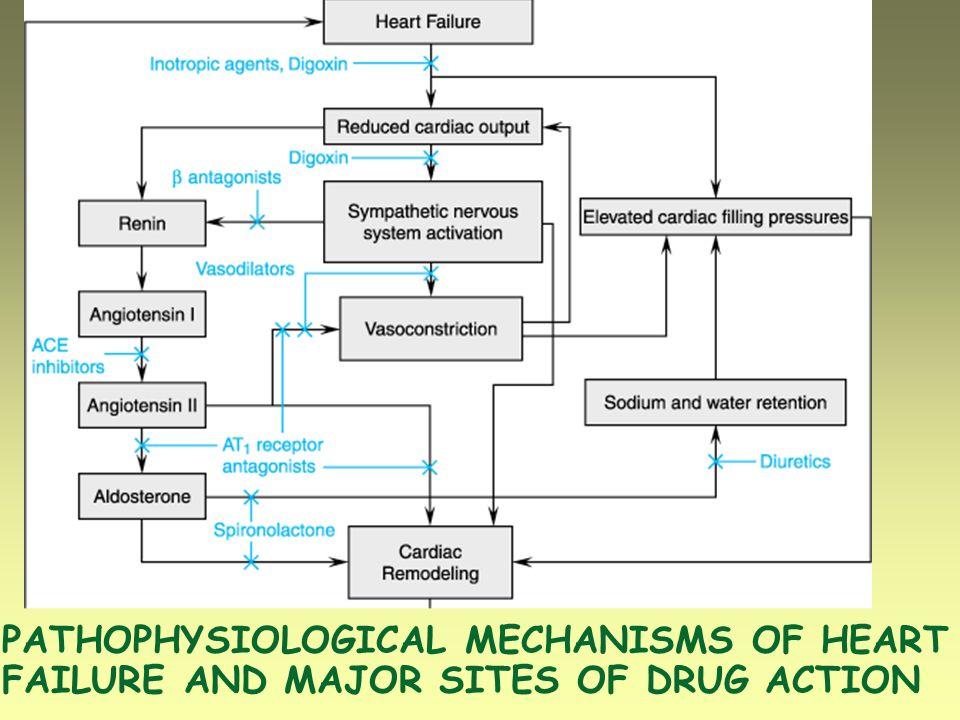 ALTERAZIONI EMODINAMICHE Volume sistolico Frequenza Volume (e P) ventricolare telediastolico Volume (e P) ventricolare telesistolico Pressione arteriosa Resistenze vascolari sistemiche Pressione capillare polmonare Congestione venosa SINTOMATOLOGIA Dispnea, ortopnea, tachipnea Edema polmonare Edemi periferici, epatomegalia =