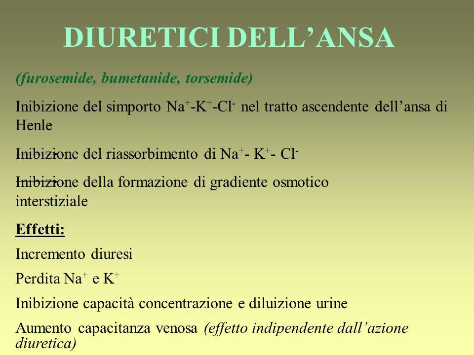 DIURETICI DELLANSA (furosemide, bumetanide, torsemide) Inibizione del simporto Na + -K + -Cl - nel tratto ascendente dellansa di Henle Inibizione del riassorbimento di Na + - K + - Cl - Inibizione della formazione di gradiente osmotico interstiziale Effetti: Incremento diuresi Perdita Na + e K + Inibizione capacità concentrazione e diluizione urine Aumento capacitanza venosa (effetto indipendente dallazione diuretica)