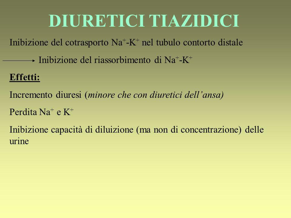 DIURETICI TIAZIDICI Inibizione del cotrasporto Na + -K + nel tubulo contorto distale Inibizione del riassorbimento di Na + -K + Effetti: Incremento diuresi (minore che con diuretici dellansa) Perdita Na + e K + Inibizione capacità di diluizione (ma non di concentrazione) delle urine