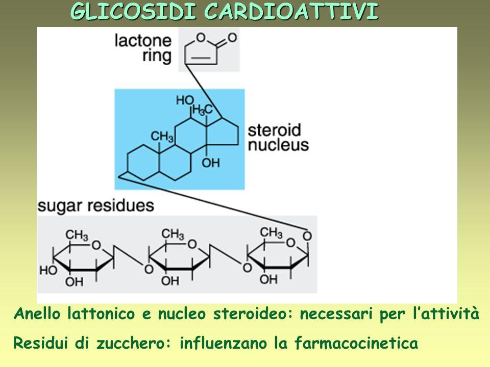 GLICOSIDI CARDIOATTIVI Anello lattonico e nucleo steroideo: necessari per lattività Residui di zucchero: influenzano la farmacocinetica