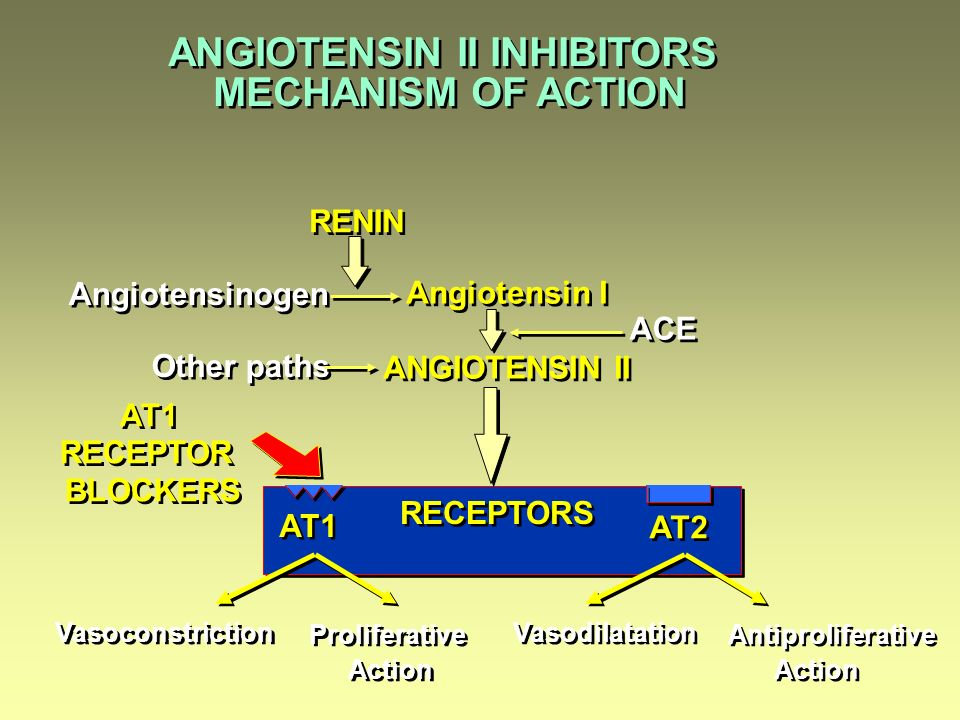 ANGIOTENSIN II INHIBITORS MECHANISM OF ACTION ANGIOTENSIN II INHIBITORS MECHANISM OF ACTION RENIN Angiotensinogen Angiotensin I ANGIOTENSIN II Angiotensin I ANGIOTENSIN II ACE Other paths Vasoconstriction Proliferative Action Proliferative Action Vasodilatation Antiproliferative Action Antiproliferative Action AT1 AT2 AT1 RECEPTOR BLOCKERS AT1 RECEPTOR BLOCKERS RECEPTORS