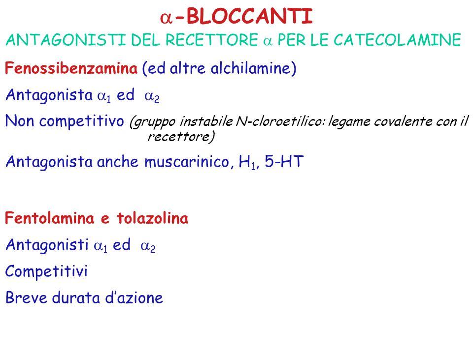 -BLOCCANTI ANTAGONISTI DEL RECETTORE PER LE CATECOLAMINE Fenossibenzamina (ed altre alchilamine) Antagonista 1 ed 2 Non competitivo (gruppo instabile N-cloroetilico: legame covalente con il recettore) Antagonista anche muscarinico, H 1, 5-HT Fentolamina e tolazolina Antagonisti 1 ed 2 Competitivi Breve durata dazione