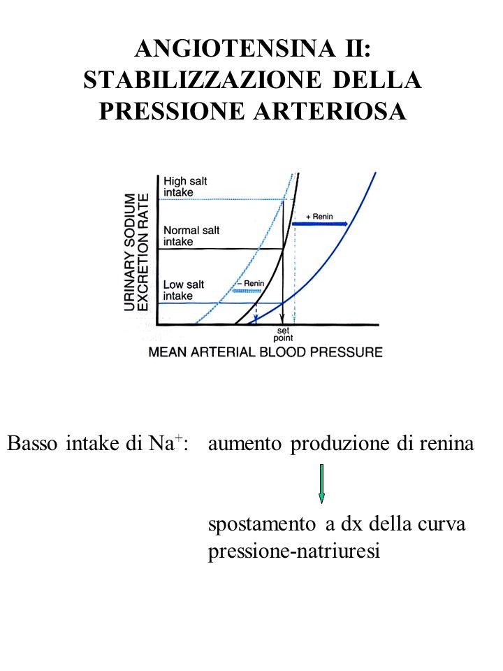 ANGIOTENSINA II: STABILIZZAZIONE DELLA PRESSIONE ARTERIOSA Basso intake di Na + :aumento produzione di renina spostamento a dx della curva pressione-n