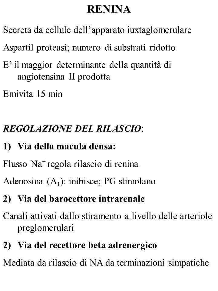 ALISKIREN Inibitore non peptidico della renina Emivita: 20-45 h Inibizione della produzione di tutte le angiotensine