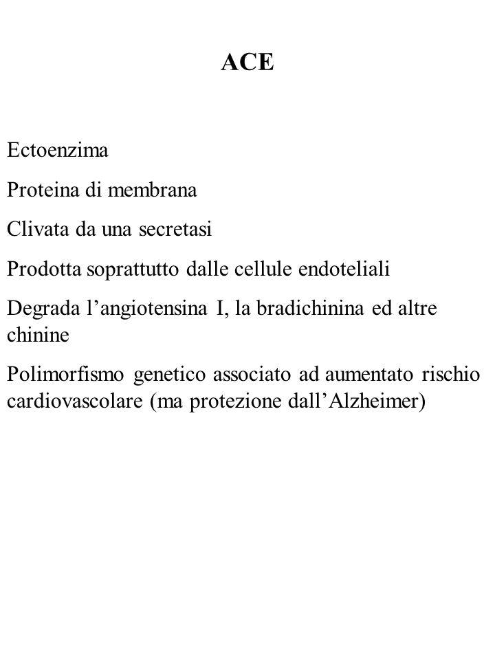ACE Ectoenzima Proteina di membrana Clivata da una secretasi Prodotta soprattutto dalle cellule endoteliali Degrada langiotensina I, la bradichinina e