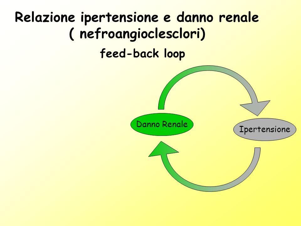 Relazione ipertensione e danno renale ( nefroangioclesclori) Danno Renale Ipertensione feed-back loop