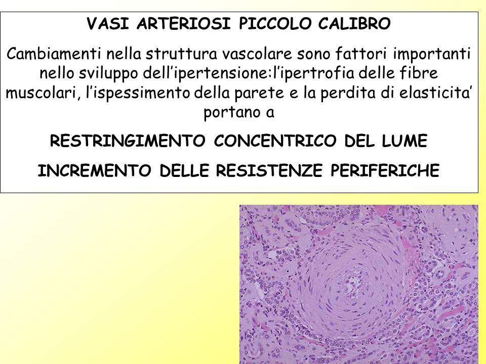 VASI ARTERIOSI PICCOLO CALIBRO Cambiamenti nella struttura vascolare sono fattori importanti nello sviluppo dellipertensione:lipertrofia delle fibre m