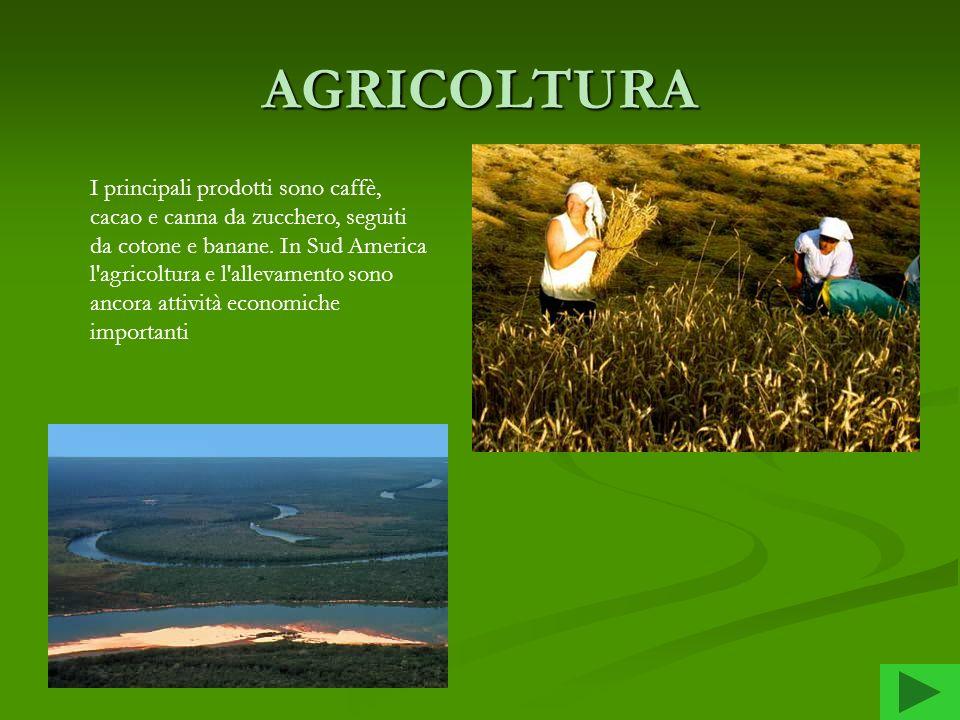 AGRICOLTURA I principali prodotti sono caffè, cacao e canna da zucchero, seguiti da cotone e banane. In Sud America l'agricoltura e l'allevamento sono