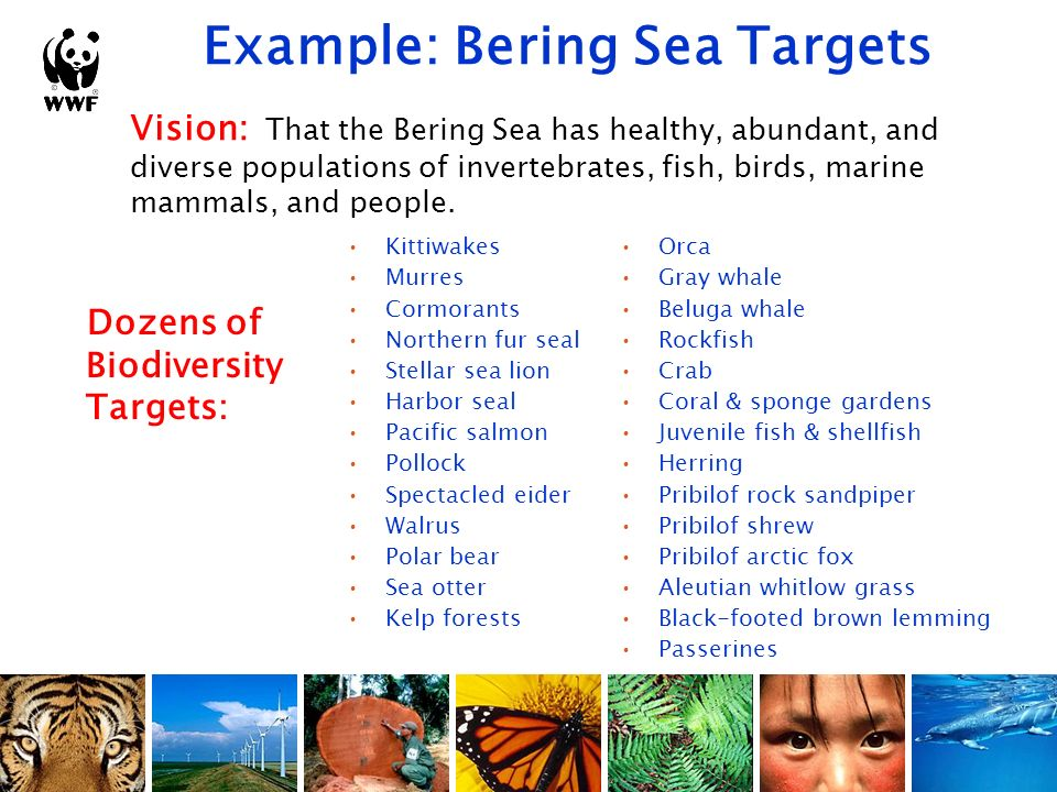 Example: Bering Sea Targets Vision: That the Bering Sea has healthy, abundant, and diverse populations of invertebrates, fish, birds, marine mammals,