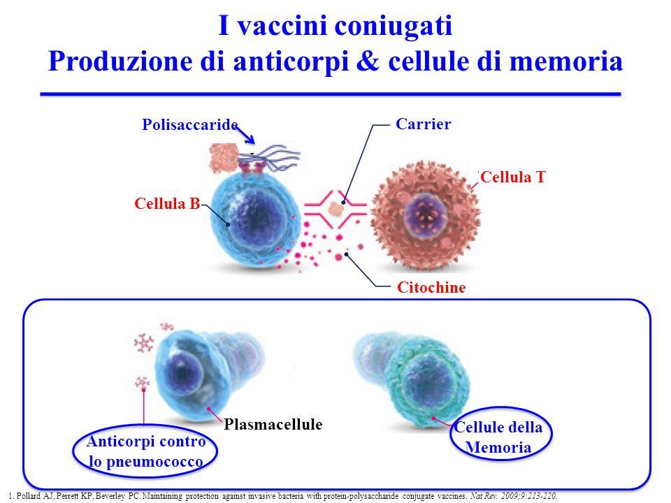 Polisaccaride Cellula B Cellula T Carrier Citochine Anticorpi contro lo pneumococco Plasmacellule Cellule della Memoria 1. Pollard AJ, Perrett KP, Bev