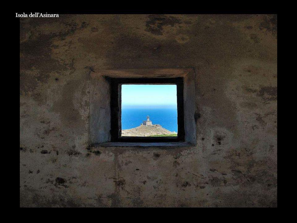 Isola dellAsinara