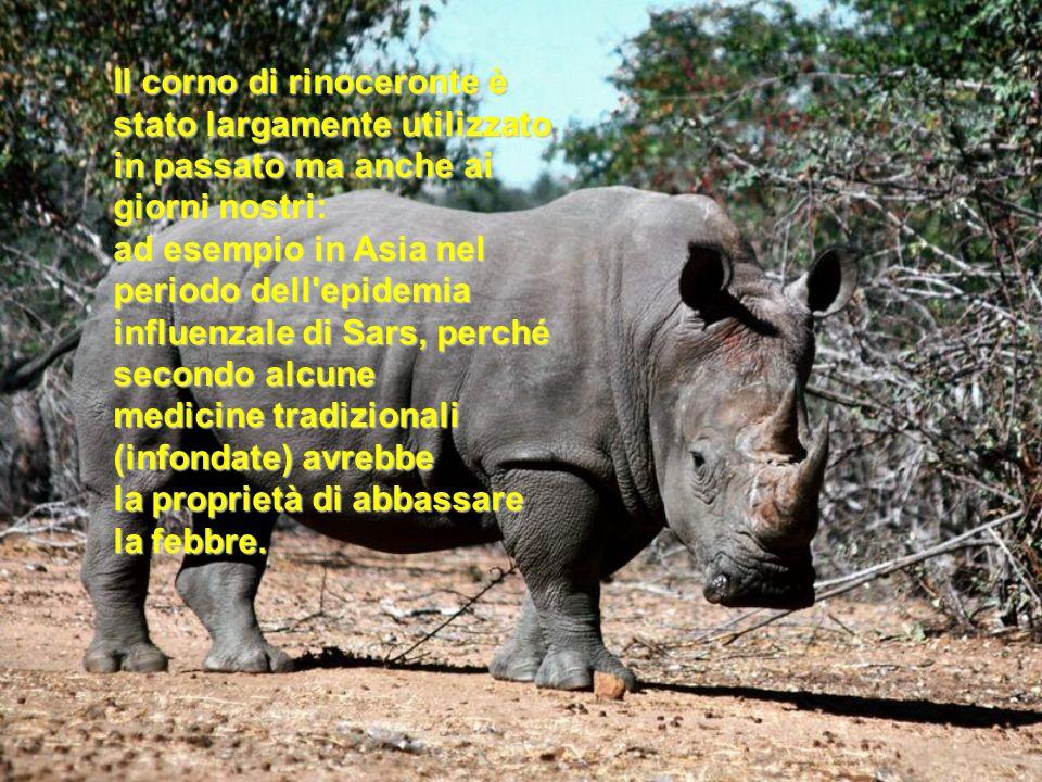 Il corno di rinoceronte è stato largamente utilizzato in passato ma anche ai giorni nostri: ad esempio in Asia nel periodo dell'epidemia influenzale d