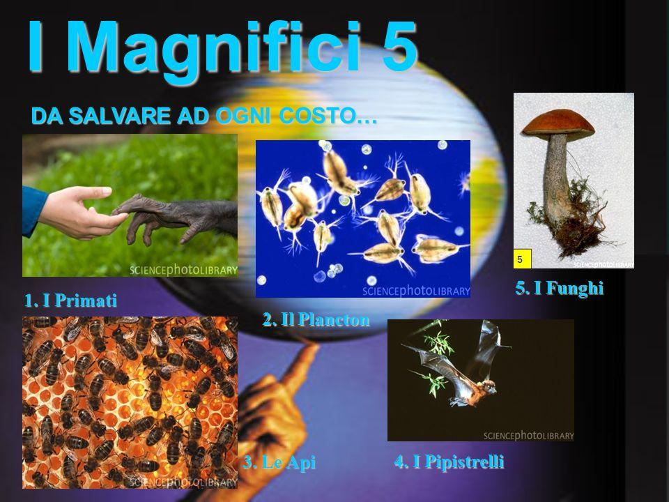 I Magnifici 5 1. I Primati DA SALVARE AD OGNI COSTO… 2. Il Plancton 3. Le Api 4. I Pipistrelli 5. I Funghi