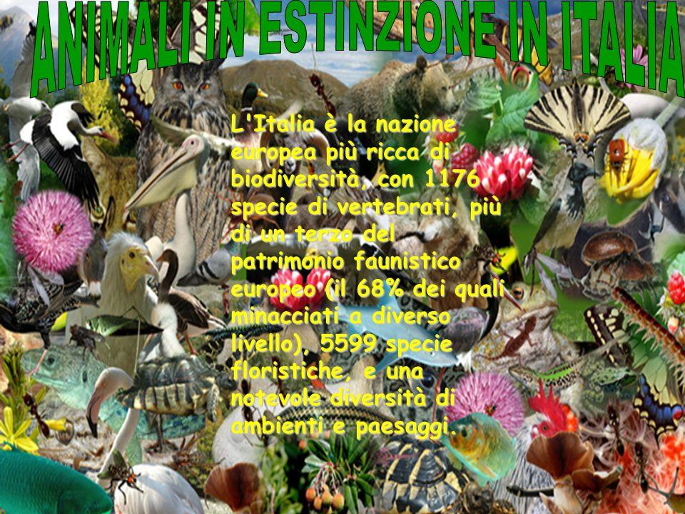 L'Italia è la nazione europea più ricca di biodiversità, con 1176 specie di vertebrati, più di un terzo del patrimonio faunistico europeo (il 68% dei