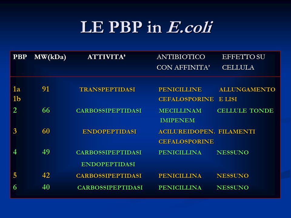 LE PBP in E.coli PBP MW(kDa) ATTIVITA ANTIBIOTICO EFFETTO SU CON AFFINITA CELLULA CON AFFINITA CELLULA 1a91 TRANSPEPTIDASIPENICILLINE ALLUNGAMENTO 1b