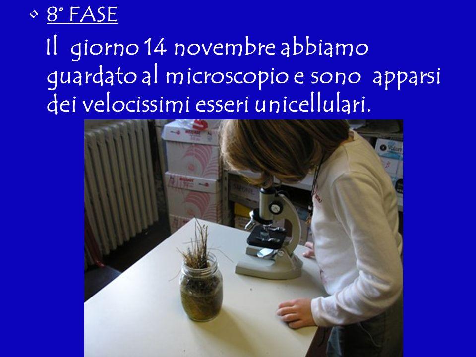 8° FASE Il giorno 14 novembre abbiamo guardato al microscopio e sono apparsi dei velocissimi esseri unicellulari.