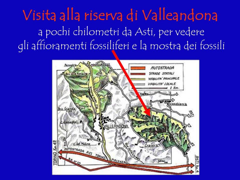 Visita alla riserva di Valleandona a pochi chilometri da Asti, per vedere gli affioramenti fossiliferi e la mostra dei fossili