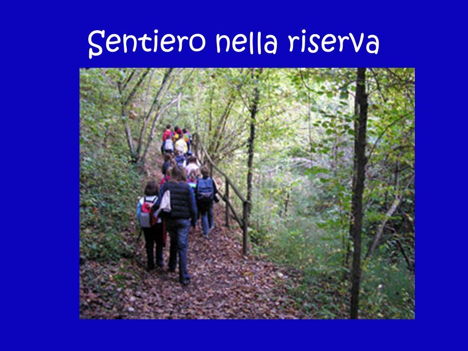 Sentiero nella riserva