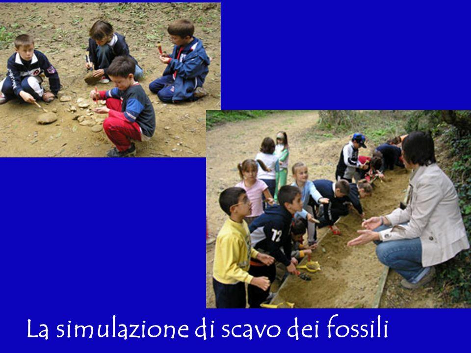 Sede della Riserva Naturale Speciale di tipo paleontologico di VALLEANDONA e VALLE BOTTO Ente Parchi e Riserve Naturali Astigiani Loc.