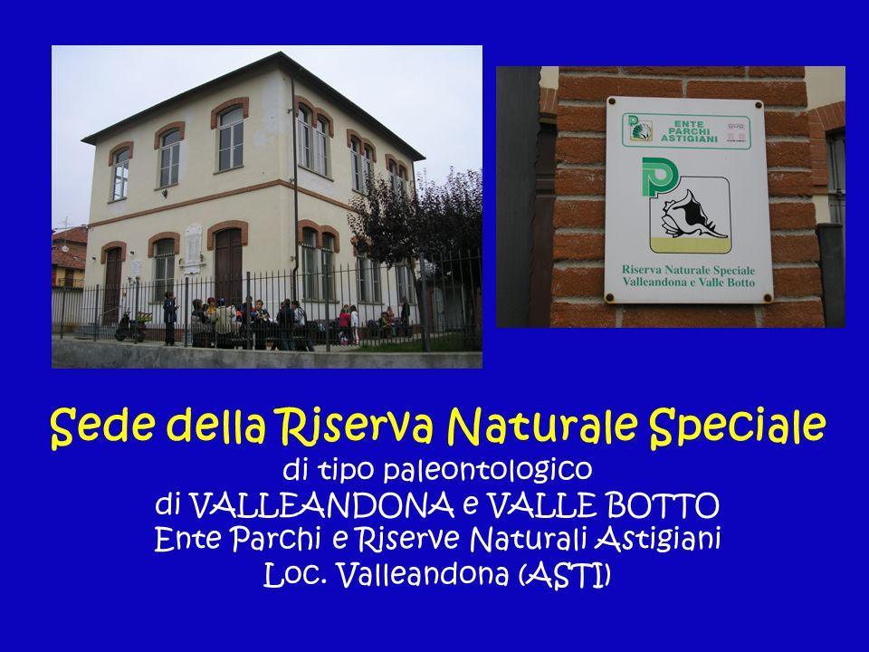 Sede della Riserva Naturale Speciale di tipo paleontologico di VALLEANDONA e VALLE BOTTO Ente Parchi e Riserve Naturali Astigiani Loc. Valleandona (AS