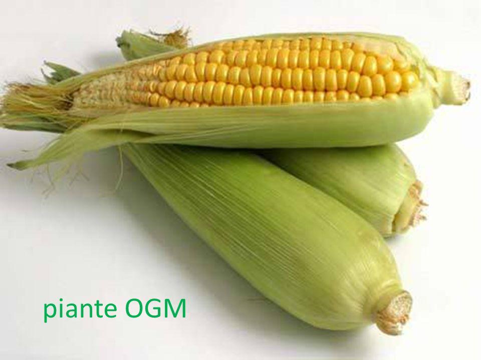 piante OGM