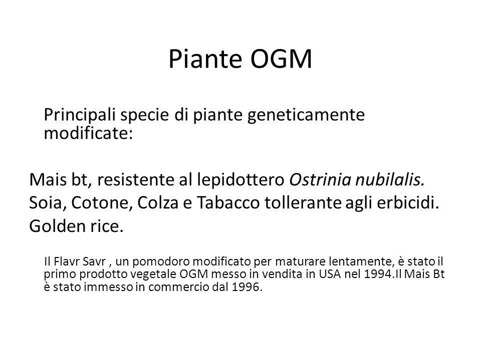Piante OGM Principali specie di piante geneticamente modificate: Mais bt, resistente al lepidottero Ostrinia nubilalis. Soia, Cotone, Colza e Tabacco
