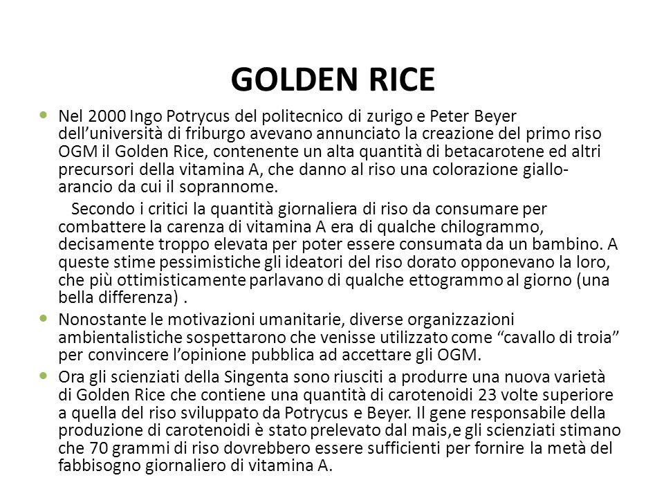 GOLDEN RICE Nel 2000 Ingo Potrycus del politecnico di zurigo e Peter Beyer delluniversità di friburgo avevano annunciato la creazione del primo riso O