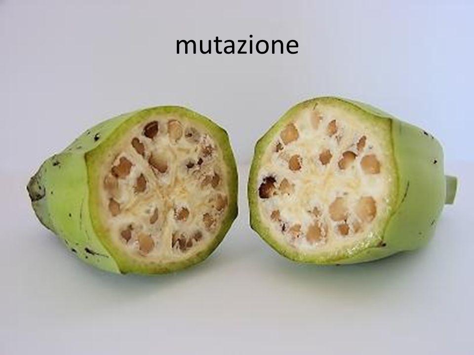 In Europa il principio di precauzione è diventato norma di controllo per limmissione di OGM nellambiente.