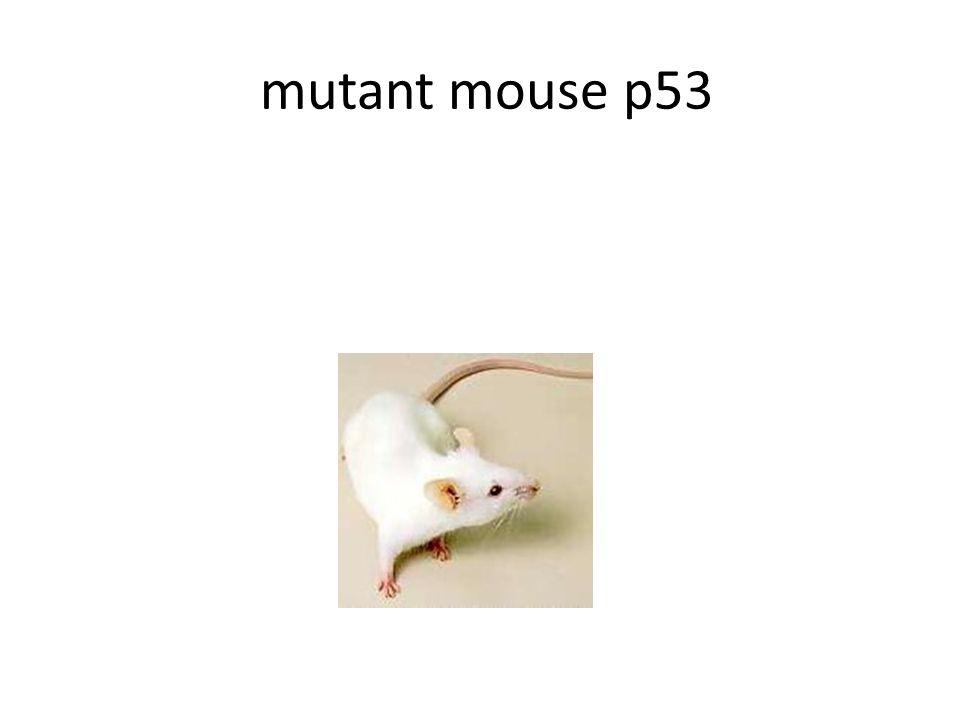 mutant mouse p53