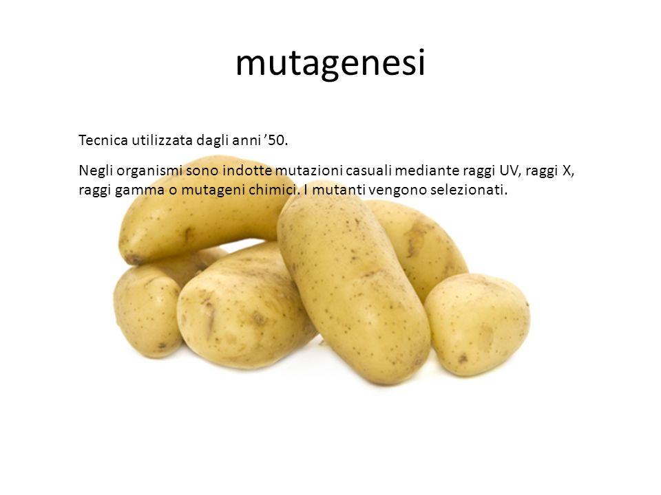 mutagenesi Tecnica utilizzata dagli anni 50. Negli organismi sono indotte mutazioni casuali mediante raggi UV, raggi X, raggi gamma o mutageni chimici