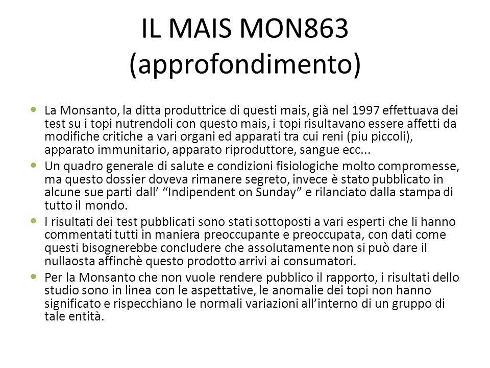 IL MAIS MON863 (approfondimento) La Monsanto, la ditta produttrice di questi mais, già nel 1997 effettuava dei test su i topi nutrendoli con questo ma