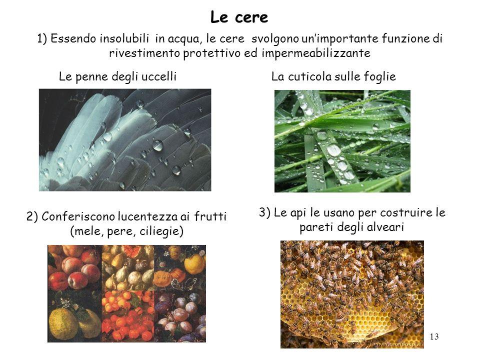 13 Le cere 1) Essendo insolubili in acqua, le cere svolgono unimportante funzione di rivestimento protettivo ed impermeabilizzante Le penne degli ucce