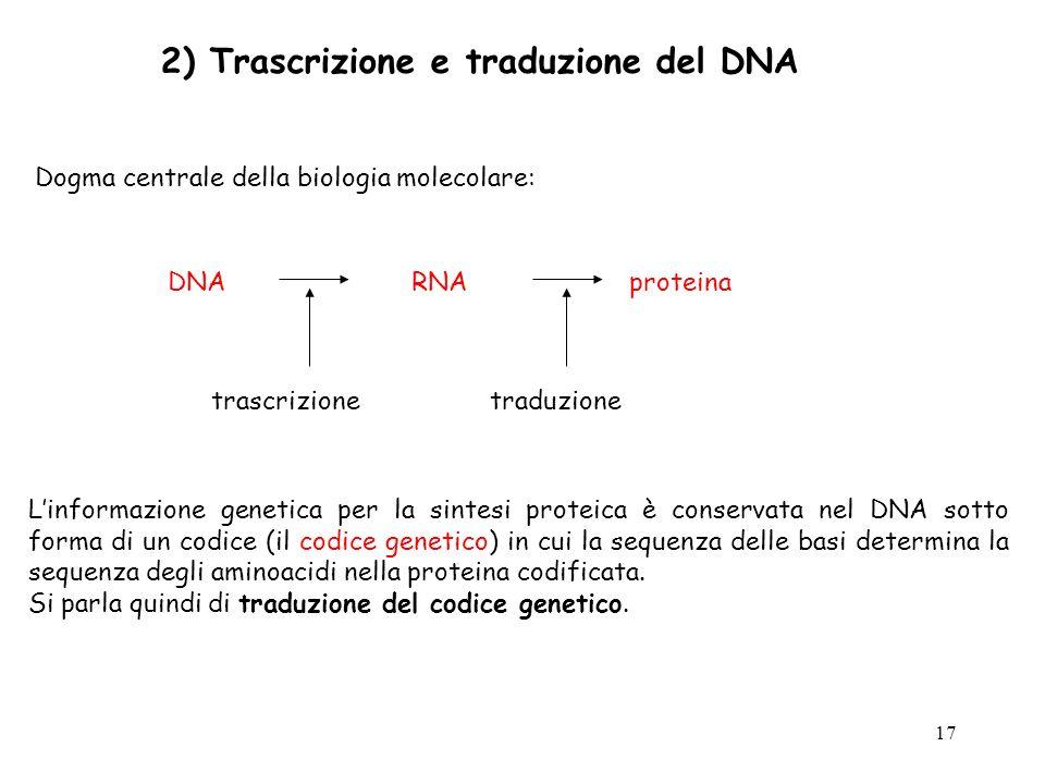 17 2) Trascrizione e traduzione del DNA Dogma centrale della biologia molecolare: Linformazione genetica per la sintesi proteica è conservata nel DNA
