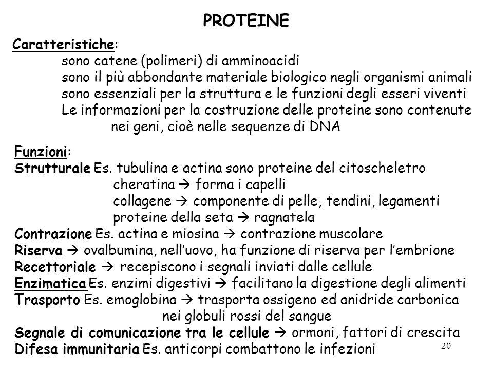 20 PROTEINE Caratteristiche: sono catene (polimeri) di amminoacidi sono il più abbondante materiale biologico negli organismi animali sono essenziali