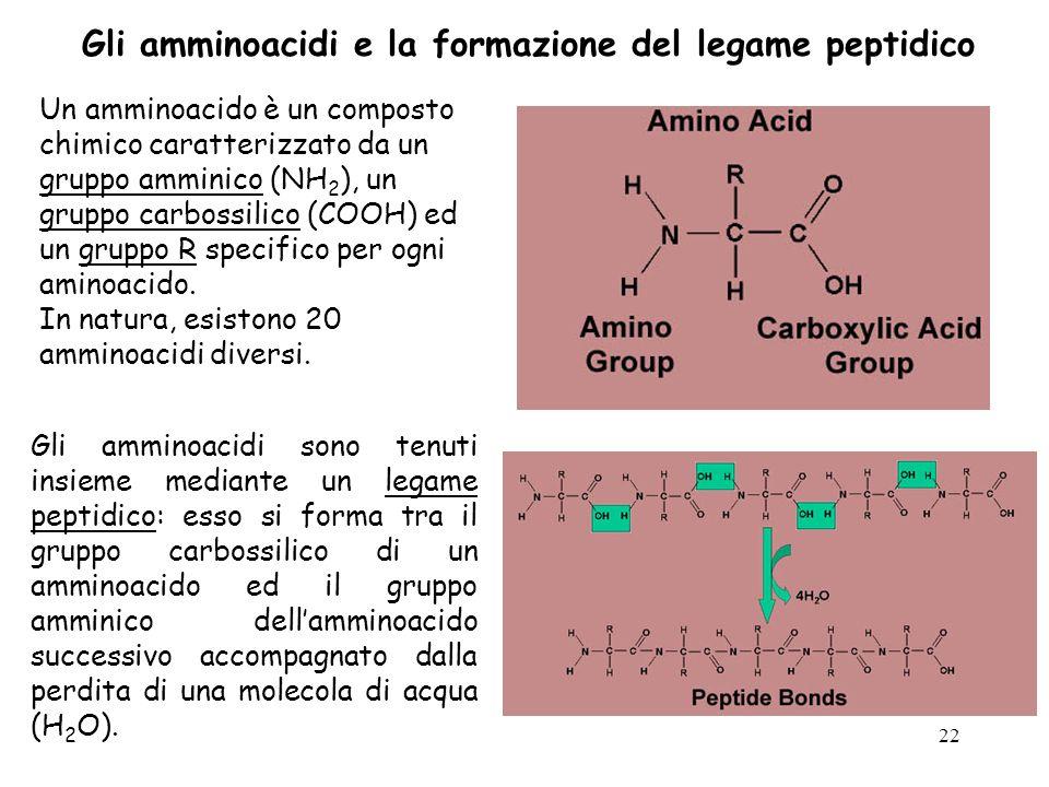 22 Un amminoacido è un composto chimico caratterizzato da un gruppo amminico (NH 2 ), un gruppo carbossilico (COOH) ed un gruppo R specifico per ogni