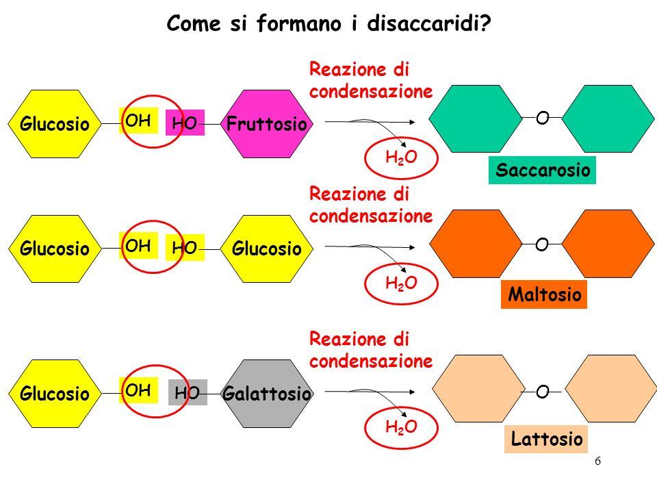 6 Come si formano i disaccaridi? Glucosio OH Fruttosio HO Reazione di condensazione H2OH2O Glucosio OH Glucosio HO Reazione di condensazione H2OH2O Gl