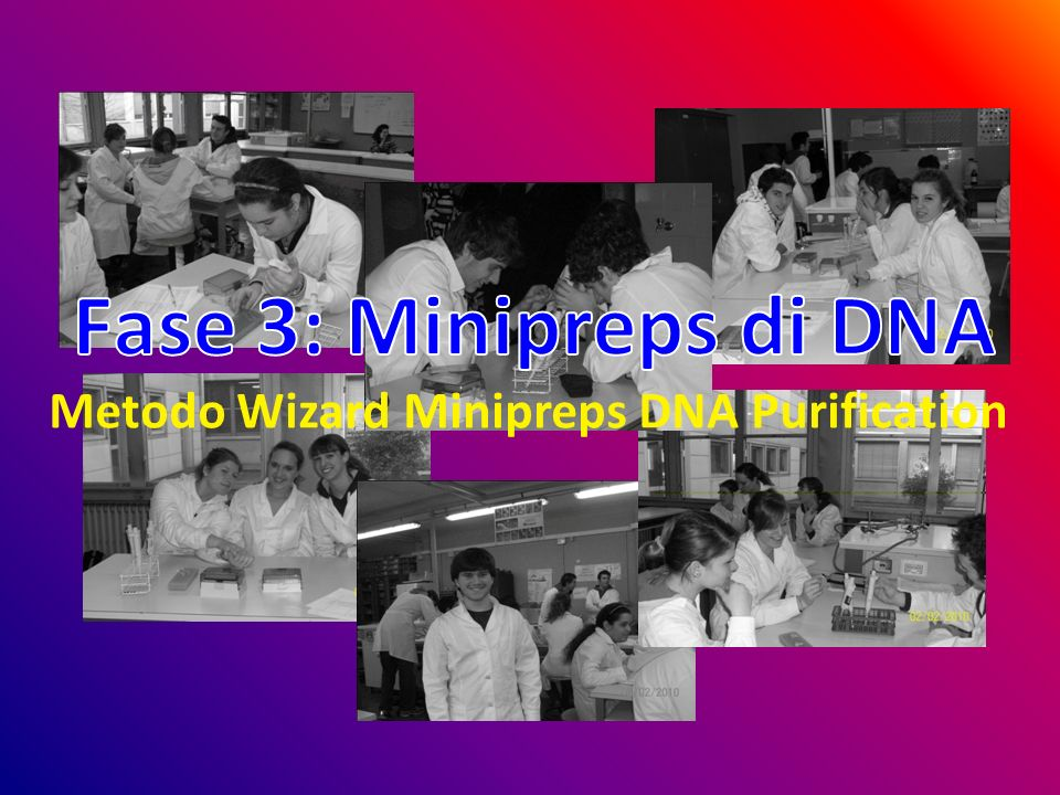 Metodo Wizard Minipreps DNA Purification