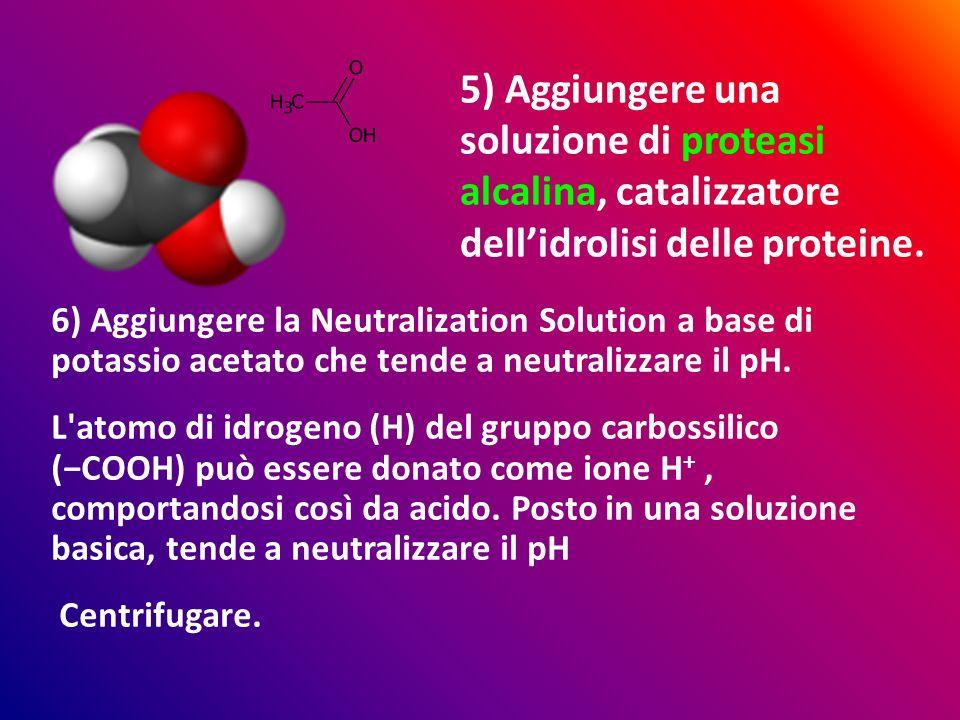 6) Aggiungere la Neutralization Solution a base di potassio acetato che tende a neutralizzare il pH. L'atomo di idrogeno (H) del gruppo carbossilico (